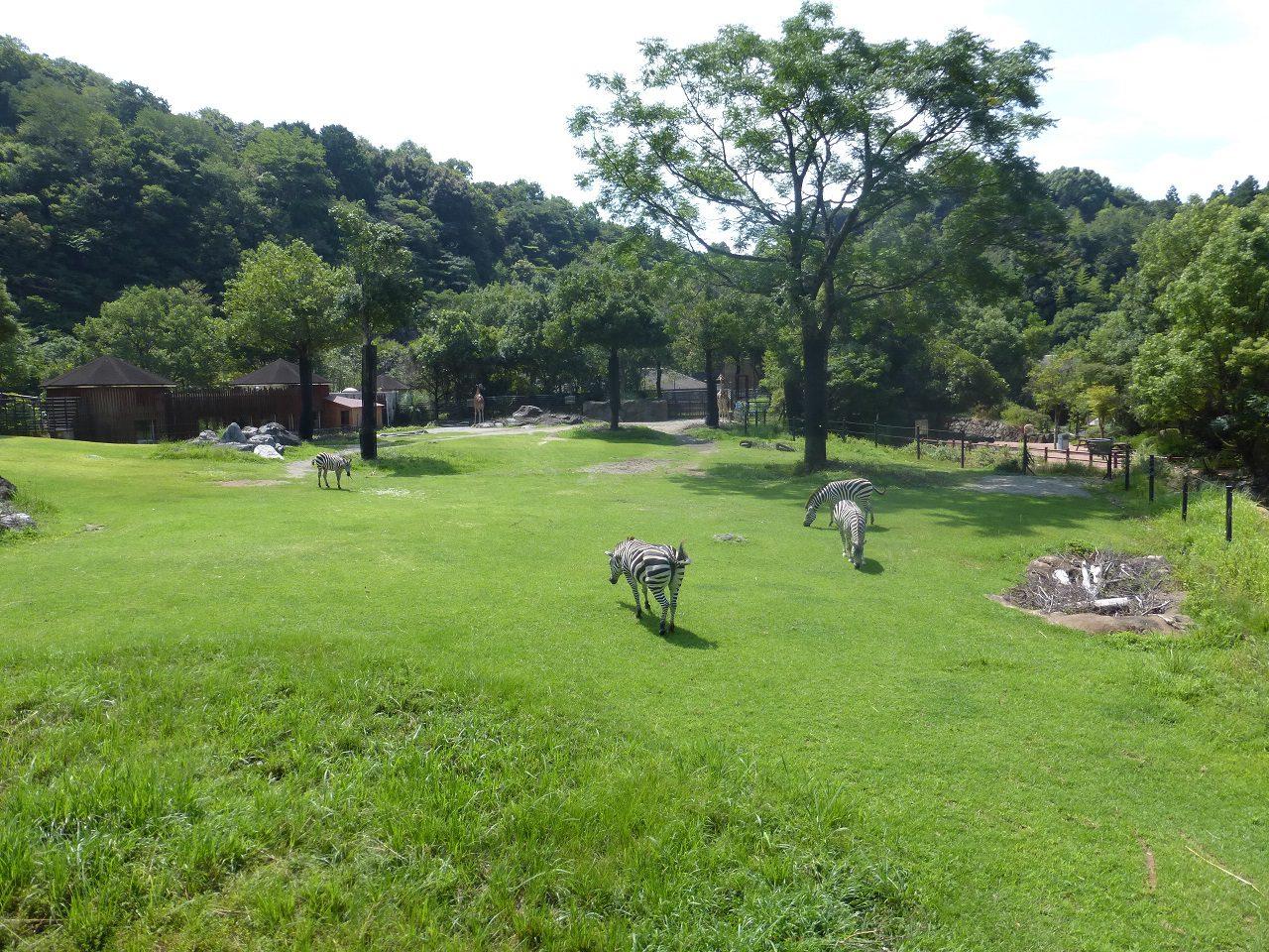 動物園 野市